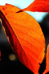 sharp orange contrast