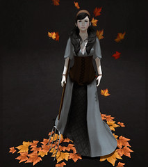LOTD# 242 when the leaves are falling