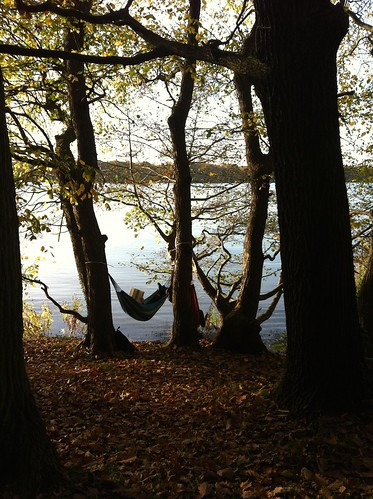 Jungfernheide Forst Berlin_ hammocks in trees at Tegeler See