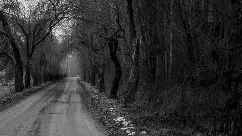 road winter white black tree forest suomi finland tie talvi puu metsä mustavalko kuja kuusankoski keltti