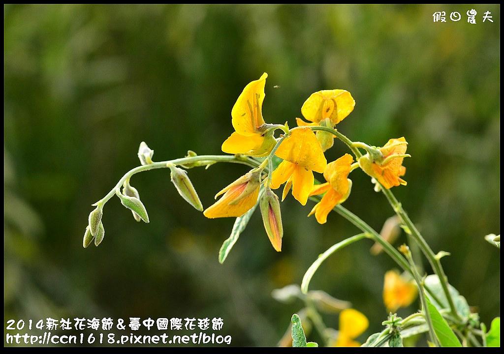 2014新社花海節&臺中國際花毯節DSC_4900
