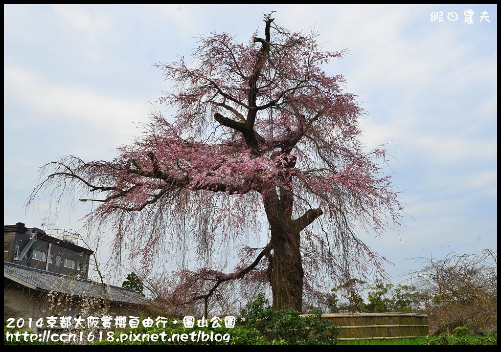 2014京都大阪賞櫻自由行.圓山公園DSC_9941