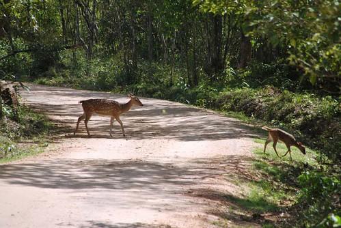51 Parque Nacional de Minneriya (3)