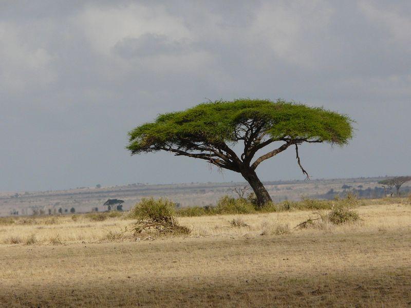 Kenia2007-0880