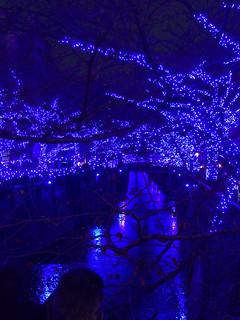 中目黒 『青の洞窟』2014