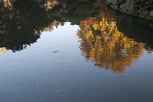 水面の黄色