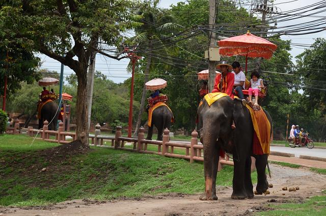 Elefantes de Ayutthaya