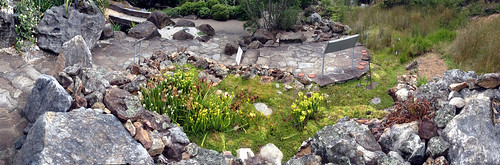 Overhead pano of the Mount Tomah botanic gardens bog