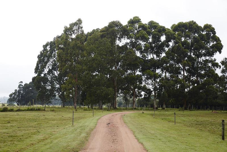 Uruguay_ 0021