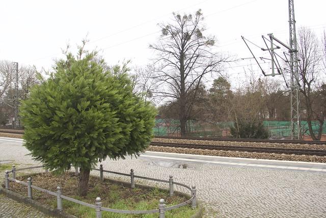 Greenery along the S-Bahn