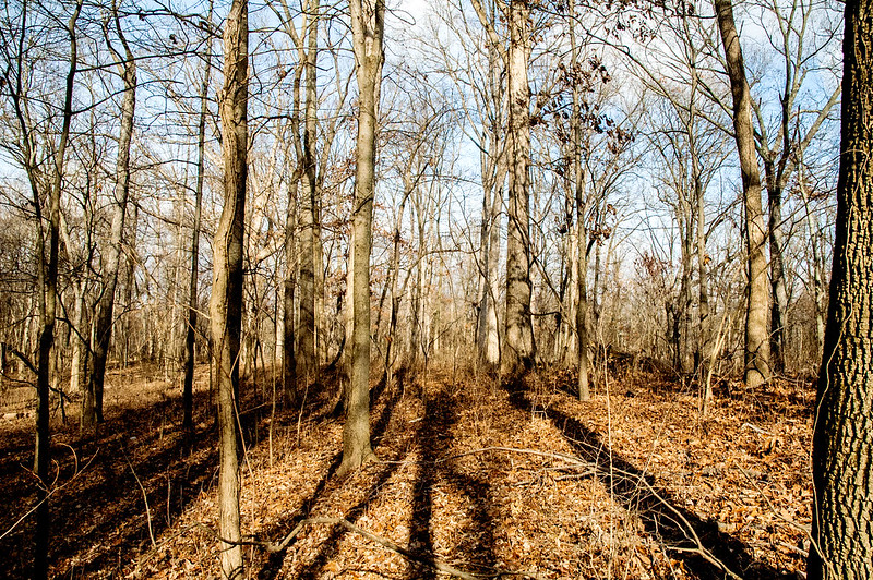 Section Six Flatwoods Nature Preserve