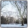 #centralpark #newyork #nyc #snow