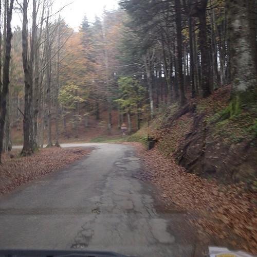 Foresta #fumaiolo#giriingiro #viaggioinromagna #romagna