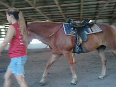 animal sports, mane, mare, equestrian sport, rein, mammal, halter, horse, horse harness,