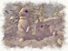 My Snow Bunnies