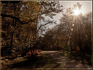Sunflare at Pondhead