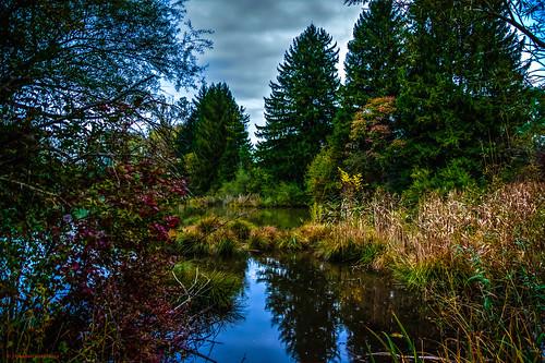 Herbstbeginn am kleinen Moorsee im Münchner Hochmoor, Aubinger Lohe, Moosschwaige