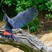 Healesville Sanctuary Landing