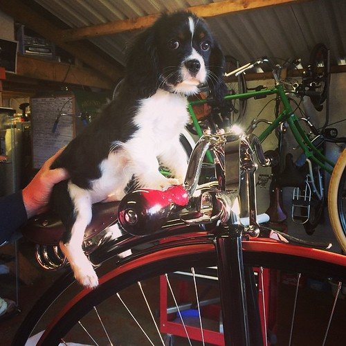 Puppies love penny farthings too! @highnellybikes