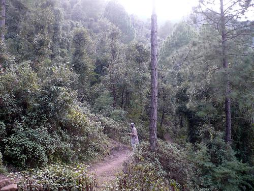 उत्तराखंड के जड़धार गांव के जंगल