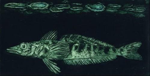 圖說:海冰下的冰魚 (C Champsocephalus gunnari)。這種通常被稱作冰鯖魚的魚種,已經被過度捕撈,被聯合國糧食與農業組織列為已耗盡的魚種。