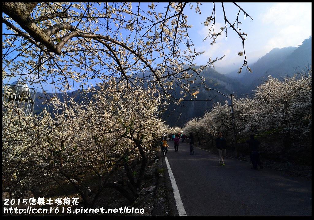 2015信義土場梅花DSC_9320