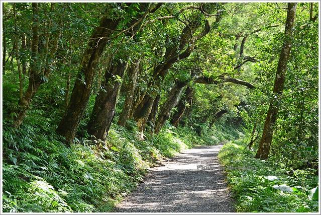 聖母山莊聖母登山步道宜蘭礁溪006-DSC_6609
