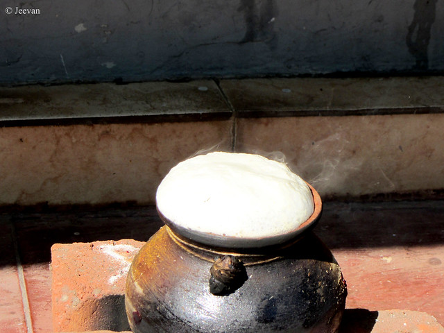 Pongal Pot - Yet to flow