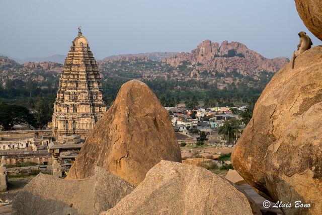 Mono contemplando el templo de virupaksha