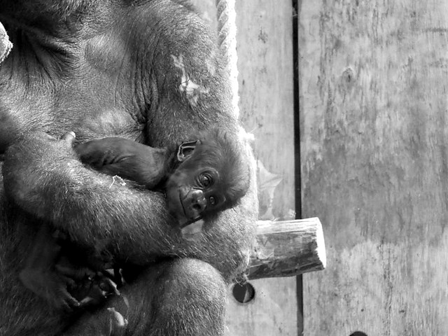 Kiano, Zoo Köln