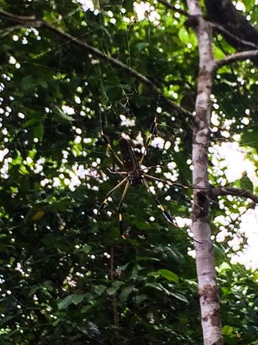 Parc National de Cahuita: attention où vous mettez la tête ! Grooosse araignée en vue. Beurk beurk.
