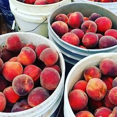 Namiquipa, Chihuahua peaches! #fruit #delicious