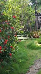 Gardens - Bahamas