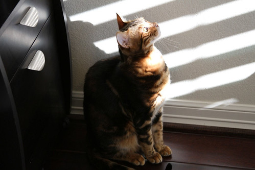Whiskers & Paws: October 2015 Edition