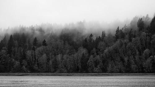 blackandwhite pacificnorthwest fog water landscape nature nisquallynationalwildliferefuge canoneos5dmarkiii canonef100400mmf4556lisusm johnwestrock monochrome washington