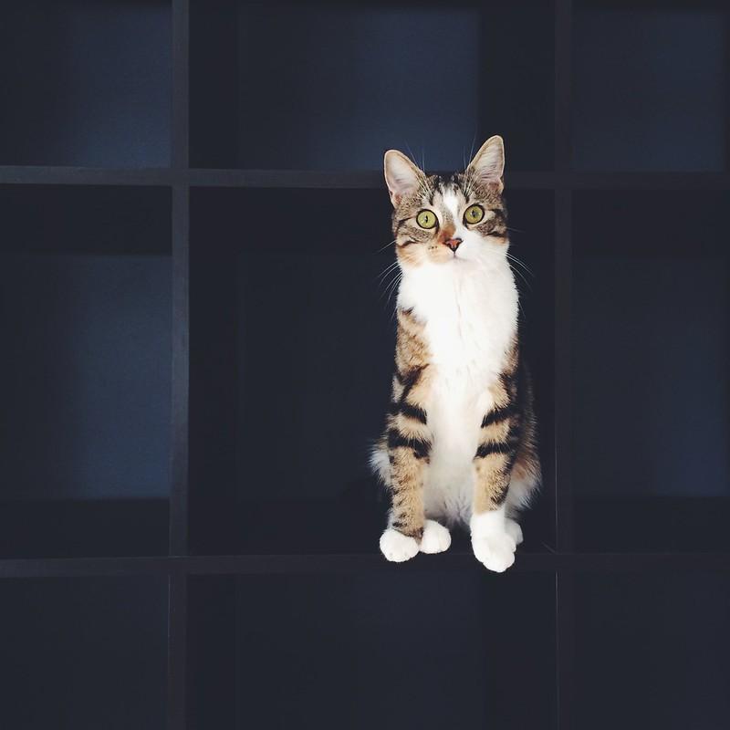 sherlock le chat difficile