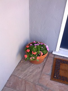 Impatiens on the front porch, October 26