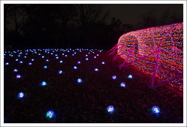 Garden Glow 2014-12-02 2
