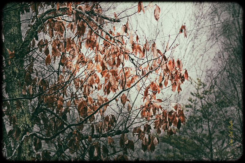 Last Days of Autumn
