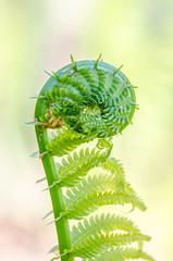 vascular plant, fern, leaf, plant, macro photography, flora, green, fiddlehead fern, close-up, plant stem,