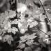 leaf-ing fall behind