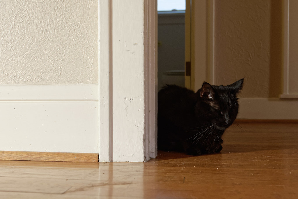 Our black cat Emma sleeps in the hallway