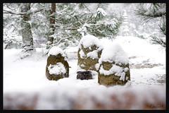 日本京都-金閣寺-雪.70