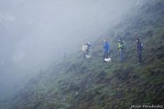 Metidos en plena niebla