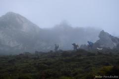Metidos en la niebla