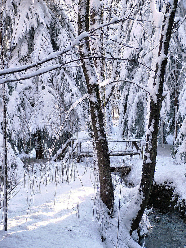 Wooden bridge in the woods under the snow