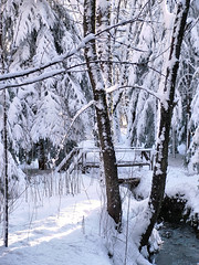 Wooden bridge in the woods under the snow