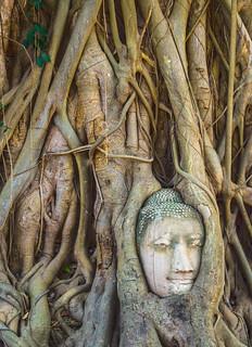 Image of Wat Phra Mahathat near Phra Nakhon Si Ayutthaya. thailand asia head buddha buddhist roots tailandia buddhism cabeza southeast wat hdr buda phra ayutthaya budismo budista mahathat raices sudeste asiatico