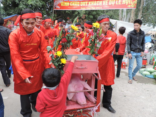 The pig is paraded through the village