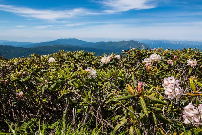 20150712-燧ヶ岳-0791.jpg